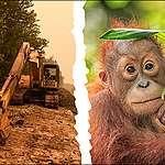 Dites non à un accord commercial entraînant la déforestation