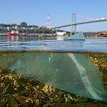 Le plastique ajouté à la liste des substances toxiques de la LCPE: un message fort contre les pressions des industriels du plastique