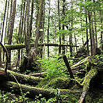How old-growth forests keep falling on B.C. Premier John Horgan's watch
