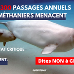 Avis défavorables de Pêches et Océans et de Parcs Canada : GNL Québec tente une diversion