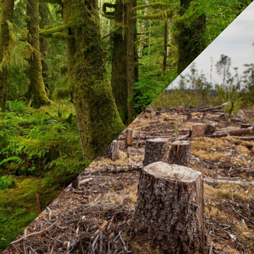Old Growth Forests Destruction