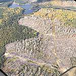 aerial view of glyphosate sprayed forest in Northern Ontario