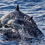 En Vivo desde el Pacífico #3: Cruce del Canal de Panamá y encuentro con delfines