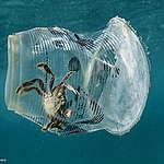"""Un vaso plástico """"caza"""" un cangrejo"""