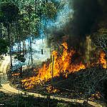 Cómo ayudar al Amazonas desde donde estés