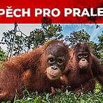 Obrovský skok v kampani za záchranu Indonéských pralesů: lidé přiměli firmu Wilmar jednat.