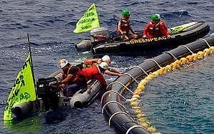 Aktivisté Greenpeace se pokoušejí vysvobodit tuňáka obecného ze sítě ve Středozemním moři. Několik nafukovacích člunů organizace Greenpeace bylo proříznuto rybáři. Jednomu z aktivistů propíchli nohu lodním hákem.