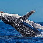 Mořské rezervace jsou nejlepší šancí pro naše oceány