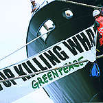 Action against Japanese Whaling in New Caledonia. © Greenpeace / Martial Dosdane