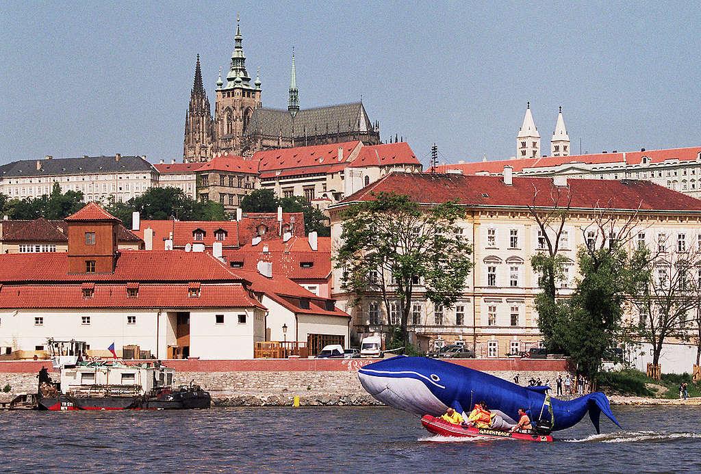 Whaling Action at Czech Parliament. © Greenpeace/Vaclav Vasku