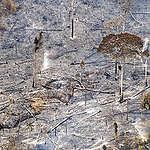 Greenpeace usiluje o zákaz prodeje produktů spojených s ničením pralesů v celé Evropské unii