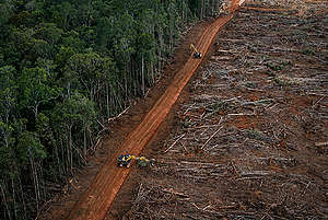 PT Megakarya Jaya Raya (PT MJR) Palm Oil Concession in Papua. © Ulet  Ifansasti