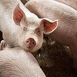 Kommentarer til rapport fra Klimapartnerskabet for Fødevare- og Landbrugssektoren