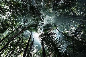Forest near Tapajós River in the Amazon Rainforest. © Valdemir Cunha / Greenpeace