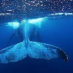 Greenpeace sejler fra pol til pol for at beskytte verdenshavene