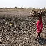 Greenpeace-analyse af IPCC-rapport – kødproduktion og skovrydning er klimakrisens hovedårsager