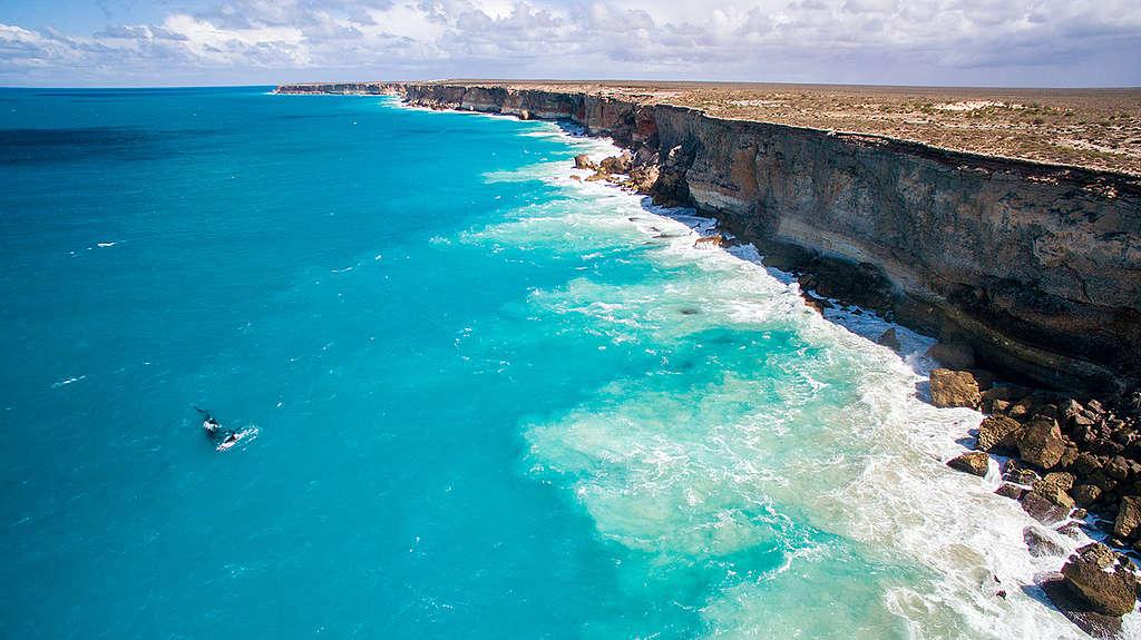Hvaler i Den Australske Bugt. © Greenpeace / Jaimen Hudson