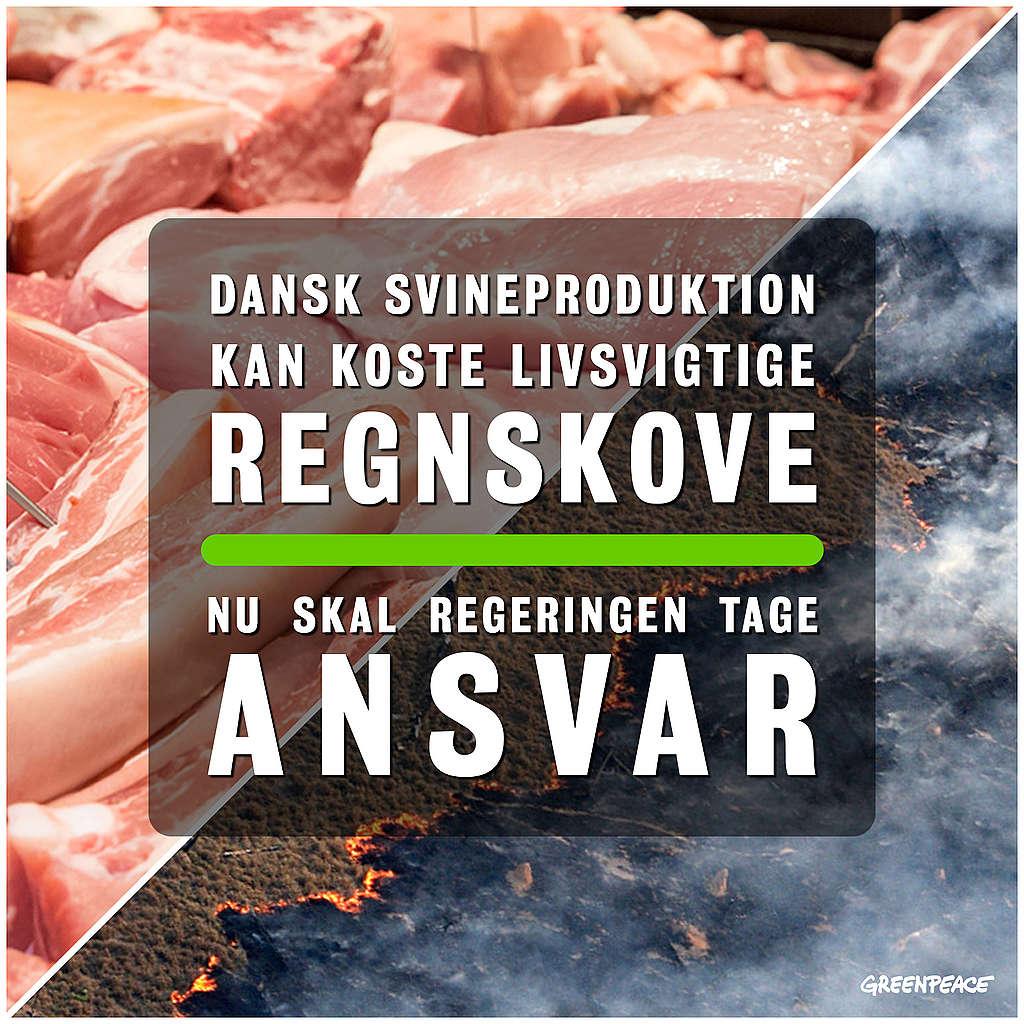 Dansk svineproduktion kan koste livsvigtige skove
