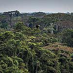 En stærk EU-skovlov er en enestående mulighed for at fjerne skovrydning fra vores indkøbskurve
