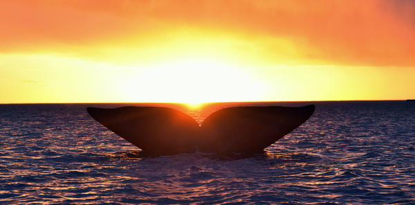 hval i Argentina