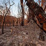 Greenpeace afslører: Danish Crowns handel med kød er medskyldig i katastrofale brande i Brasiliens vådområde