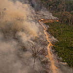 Organisationer i appel til passiv dansk regering: Hæv stemmen over for Brasiliens skovødelæggelse og brud på menneskerettigheder