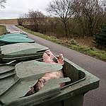 Her er billedet, svineproducenterne ikke vil have, at du og offentligheden ser