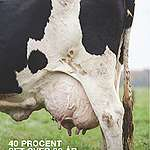 Ny Greenpeace-rapport: Danmarks millioner af køer og svin er en tikkende metan-bombe under landbrugets klimaaftryk