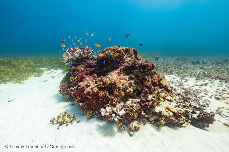 Koraller på Saya De Malha banke i Det Indiske Ocean.