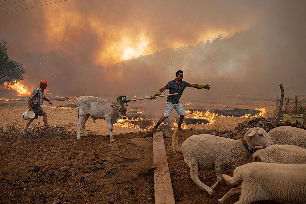 Tyrkiet-brand-miljø
