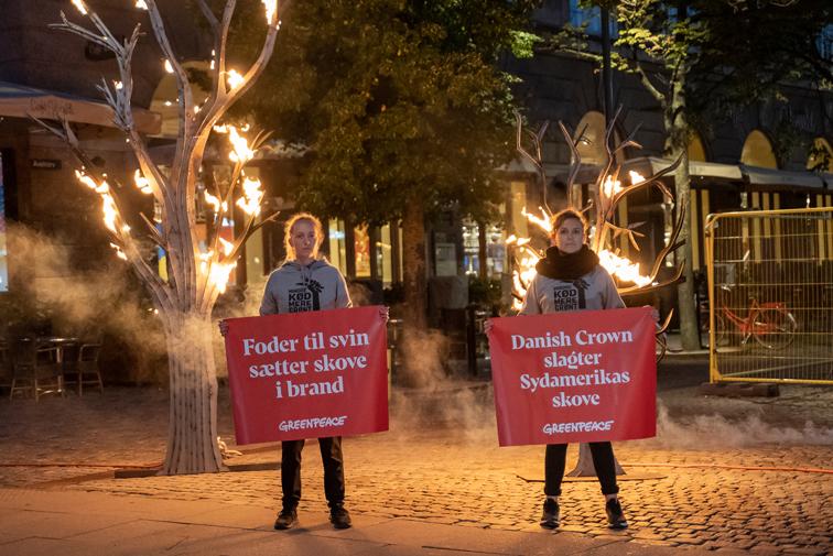 Greenpeace demonstrerer ved indgangen til Axelborg, hovedkvarter for Landbrug & Fødevarer, mod Danish Crowns sojaimport, der fører til skovrydning i Sydamerika. (Foto: Jonas Ahm)