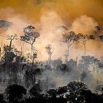 Deforestation and Fire Monitoring in the Amazon in August, 2020. © Christian Braga / Greenpeace