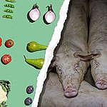 Kostråd sætter mindre kød på menuen – nu må regeringen gå samme vej med storproduktionen af køer og svin