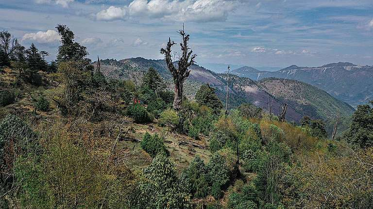 Ancient Himalayan Hemlock Tree in Yunnan, China. © Xia De Rui / Wild China / Greenpeace
