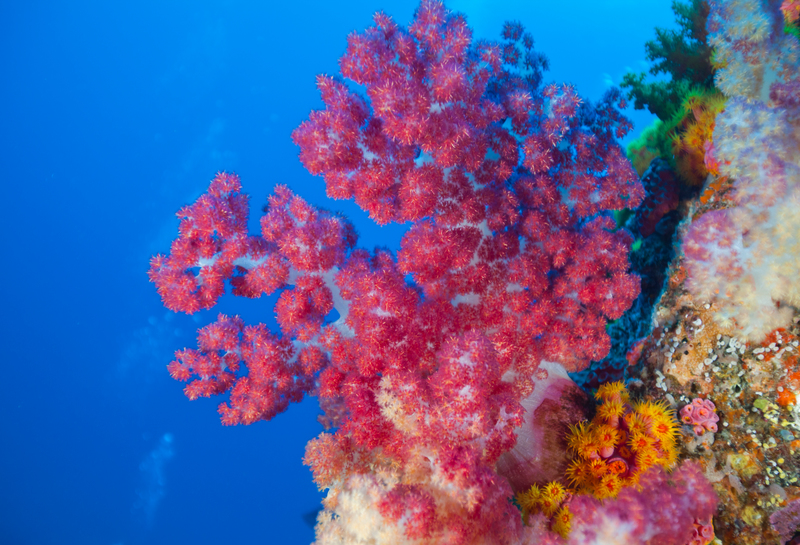 What is coral? What are the causes, impacts, and solutions of coral bleaching?
