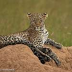 From ISDS to ICS: a leopard can't change its spots