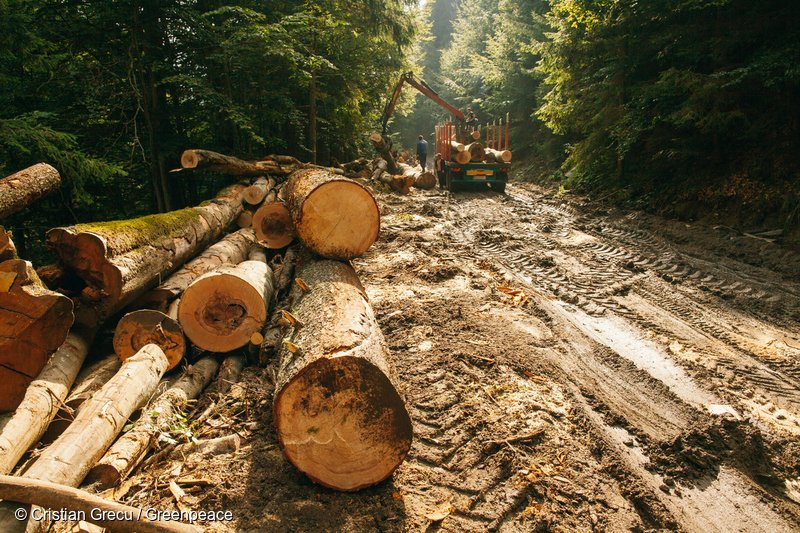 Logging in Romania