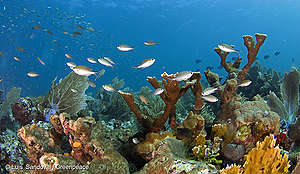 Studies of Coral Health in Mexico