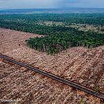 Certification schemes let forest destruction into EU market