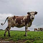 EU leaders set to greenwash EU farm policy
