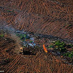 Forest-wrecking industries try to sabotage new EU forest law