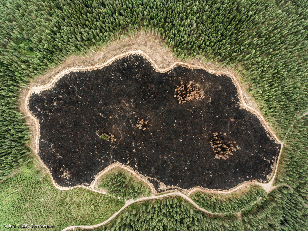 The Future of Forests in the European Union