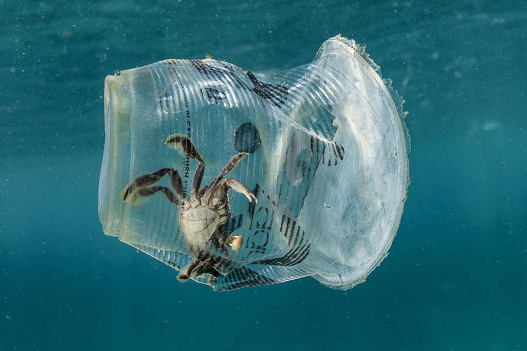 Rapu ja meren muovijäte