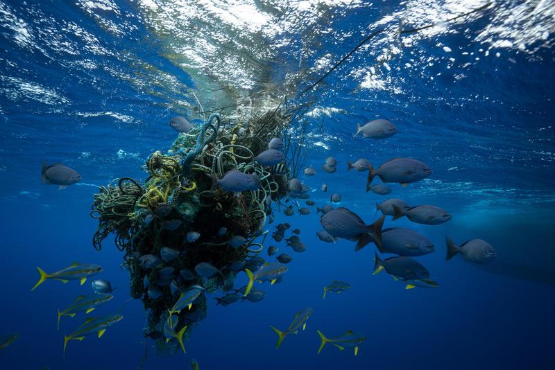 Haamuverkot jatkavat kalastusta tappaen kaloja turhaan