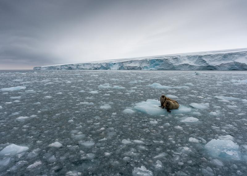 Arktista jäämerta