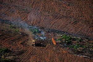 Metsäpaloja Amazonilla 2020