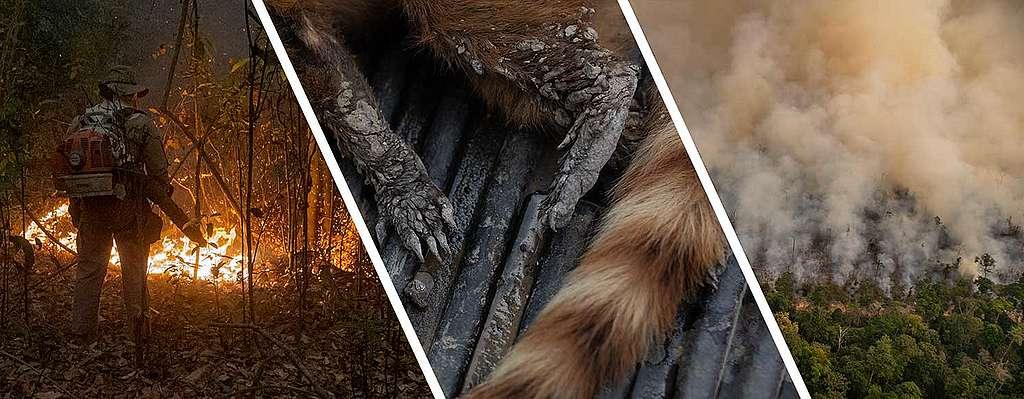 Pantanalin kosteikkoalueella riehuu katastrofaaliset metsäpalot.