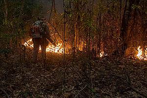 Palomies Pantanalin suiston metsäpaloalueella syyskuussa 2020