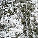 Metsähallitus hakkaa edelleen Evon tulevassa kansallispuistossa – Greenpeace paikalla