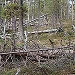 Suomi lobbaa ilmastolle haitallisia sopimuksia ja vaatii heikennyksiä bioenergian kestävyyskriteereihin